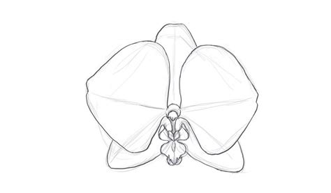how to sketch how to draw a orchid
