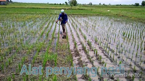 Pembersih Padi Alat Penyiang Gulma Padi Situbondo