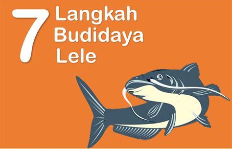 Bibit Lele Mutiara 7 langkah budidaya ikan lele pembesaran lengkap dan urut