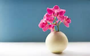 orchid flower picture hd weneedfun