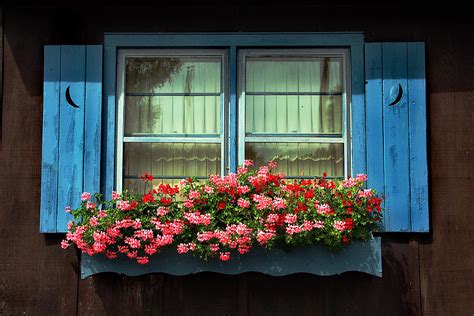 window flower box 24 simple and easy tips to change the look of your house