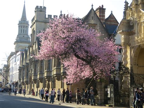 Hall Tree by Summer Study Abroad Program In Oxford England Acmrs