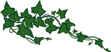 ivy vine free vine clip art pictures clipartix