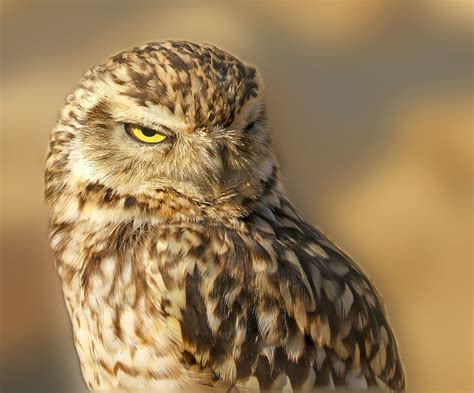 Owl Tattoos Their Meaning Plus 14 Stunning Exles Owl Meanings