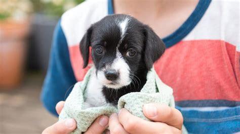 adopting  shelter pet  good   wallet