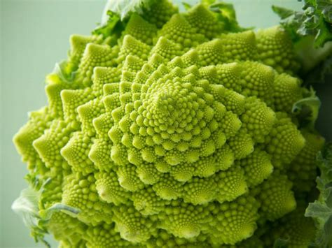 patterns in nature topic test your vegetables nutrients change with their circadian