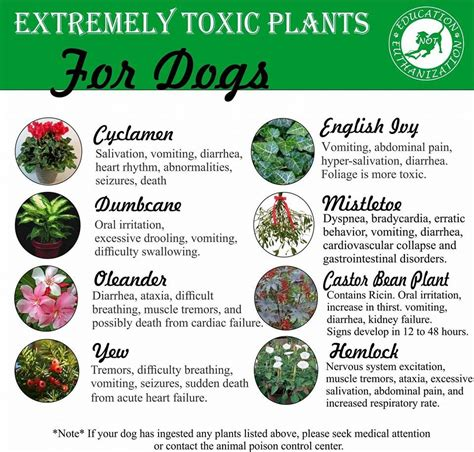 What Plants Are Poisonous To Dogs | plants toxic to dogs regan s dog training