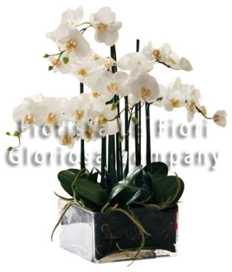 vaso per orchidea phalaenopsis pianta di orchidea phalaenopsis con vaso in vetro