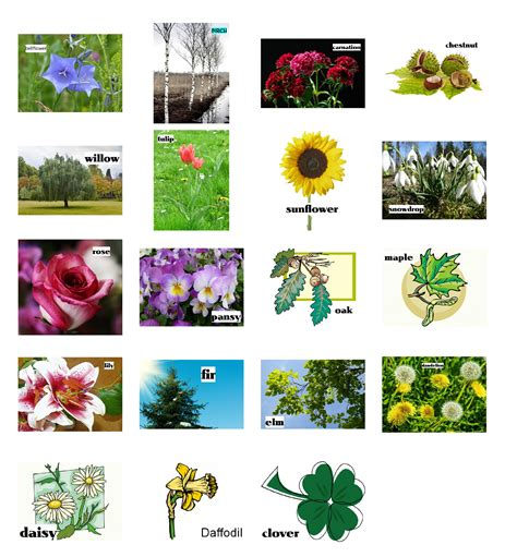 list of garden flowers common names plants learn the names of 15 kinds of plants to