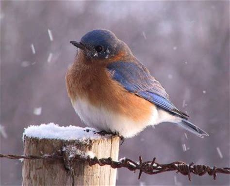 birds in winter photos hd wallpapers pics