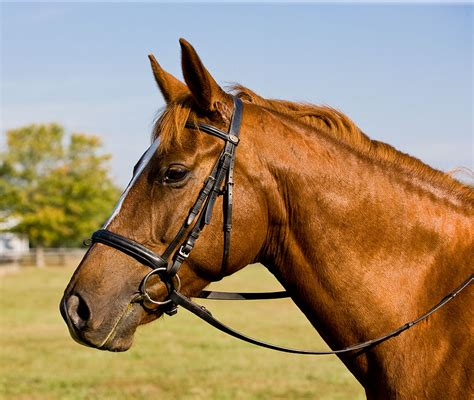 pictures images horses wallpapers pictures images