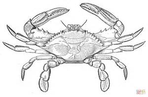 Blue Crab Coloring Page | m sketch of blue crab coloring coloring pages