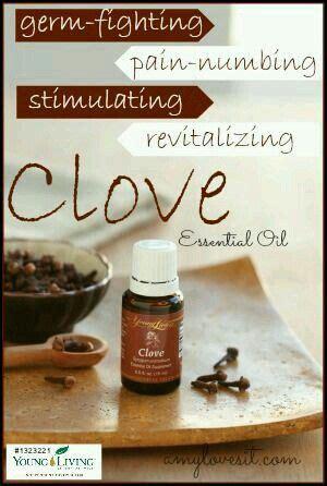 Living Clove 28 best clove living images on clove