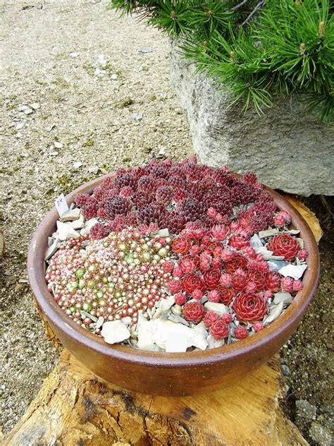 Mini Rock Garden Small Rock Garden Ideas Photograph With Space Let Y