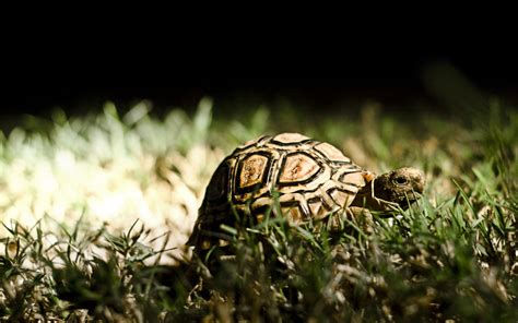 turtles background turtle wallpapers best wallpapers