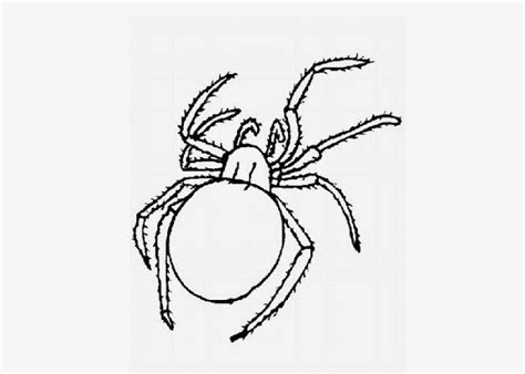 baby spider coloring page baby bunny rabbit coloring pages colorings net