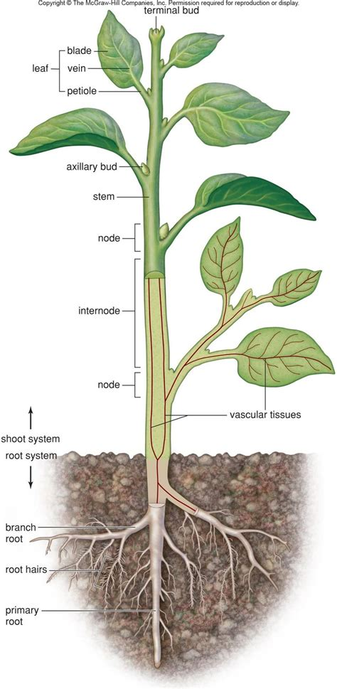 root structure diagram 7 best physical world info images on plants