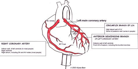 diagram of coronary arteries coronary arteries labeled guru instructor resources