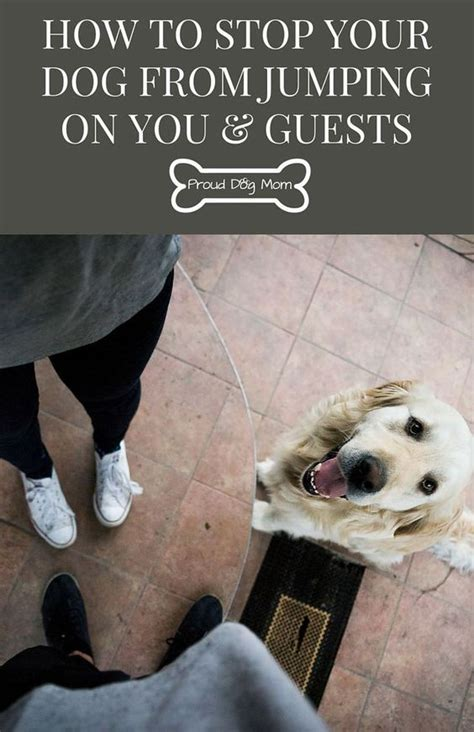 how to stop my puppy jumping on the sofa how to stop your dog from jumping on you guests