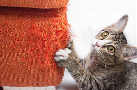 kat krabt aan behang hoe maak je jouw interieur geschikt voor een kat in huis