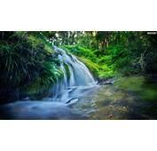 YouWall  Green Forest Waterfall Wallpaper Wallpaperwallpapersfree