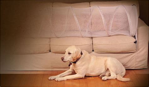 keep sofa how to keep your pets the furniture