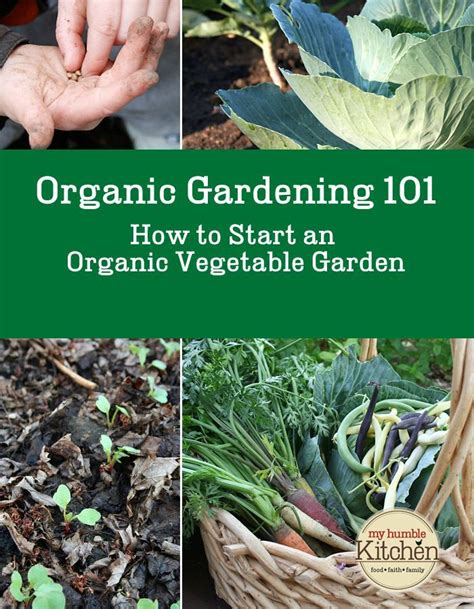 Organic Gardening 101 How To Start An Organic Vegetable Starting A Small Vegetable Garden