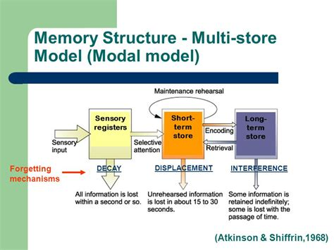 define memory organization in detail all in one tuts cognitive psychology c81cog 5 memory structure