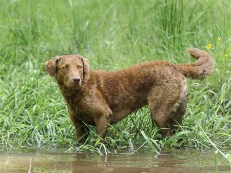 breeds with webbed five breeds with webbed pets4homes