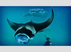 I 17 luoghi più belli del mondo per le immersioni ... L Bello