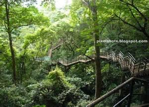 Tree Canopy Walkway by Adventure Zone Thenmala Ecotourism Kerala Rock