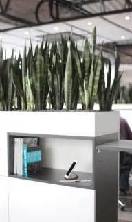 office indoor design best 25 office plants ideas on best plants