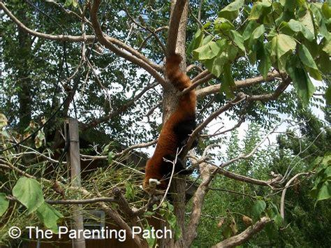 richardson zoo in garden city kansas wordless