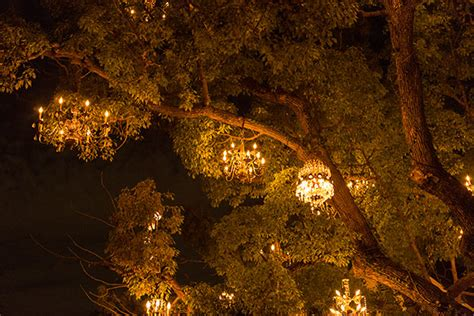 The Chandelier Tree Of Silver Lake Los Angeles Surfdog The Chandelier Tree