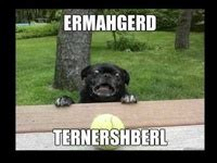 ermahgerd pug 20 best images about ermahgerd verdeorsh on dogs and