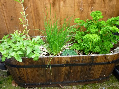 Herb Garden Planter Container by 5 Herb Garden Design Ideas We