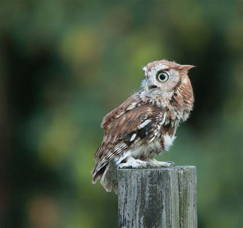 how to attract owls blain s farm fleet blog