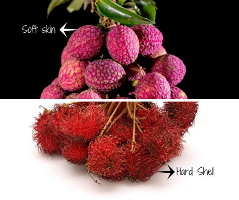 All About Lychees by Rambutan Vs Lychee Which One Is Better Asian Fruit World
