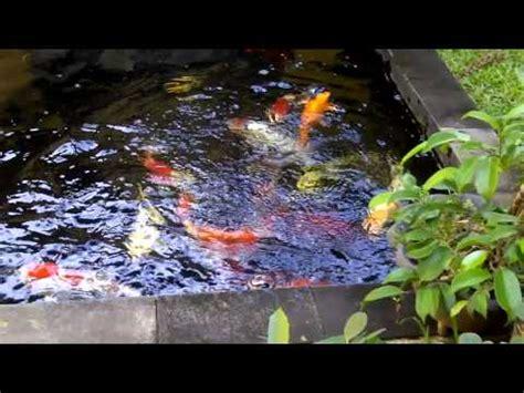 cara membuat siomay hoki cara membuat kolam ikan dalam rumah posisi bikin hoki