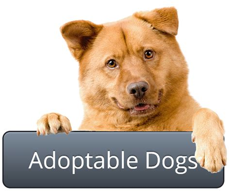 how much is it to adopt a puppy how much does it cost to adopt a puppy from the humane society mccnsulting web fc2