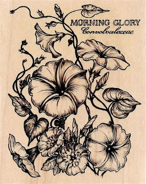 morning glory tattoo designs details about 2015 ford mustang v6 convertible rwd