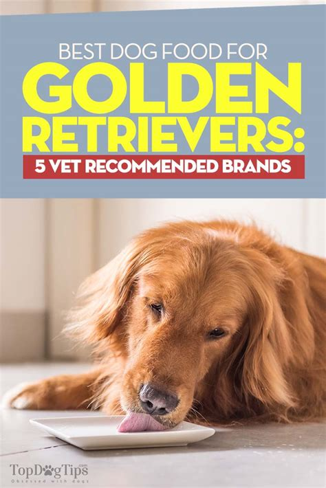 food for golden retriever best food for golden retrievers 5 vet recommended
