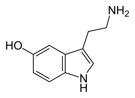 are melatonin amp serotonin related to the philosopher s