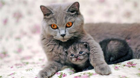 Gamis Anak Milli On Cat Flower hd wallpaper cat desktop backgrounds hd 1080p