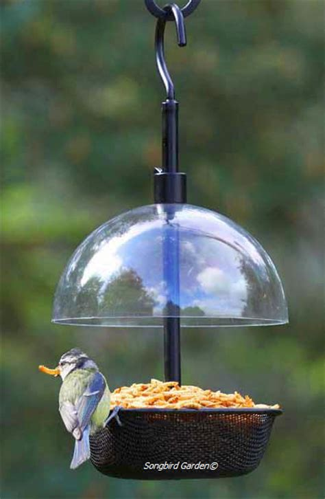 mealworm feeders for feeding live mealworms to bluebirds
