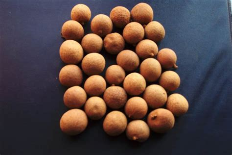j fruit dehydrated lychee dehydrated lychee products china dehydrated lychee supplier