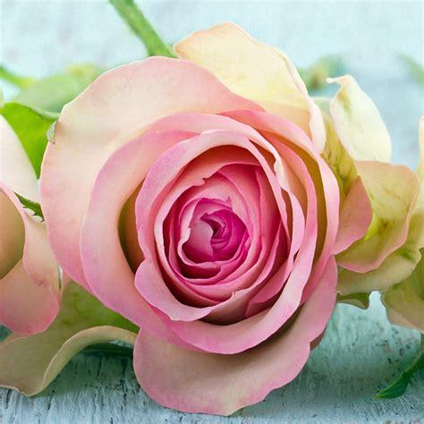 flowers in november five reasons to send flowers in november
