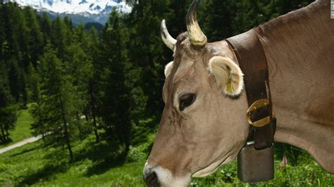 Cow Bell skiing s arts to invade olympics cnn