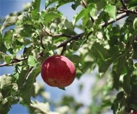 fruit trees that will grow in wisconsin trees fruit - Fruit Trees Wisconsin