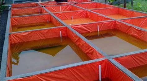 cara membuat usaha maju cara budidaya ikan lele di kolam terpal lengkap untuk pemula